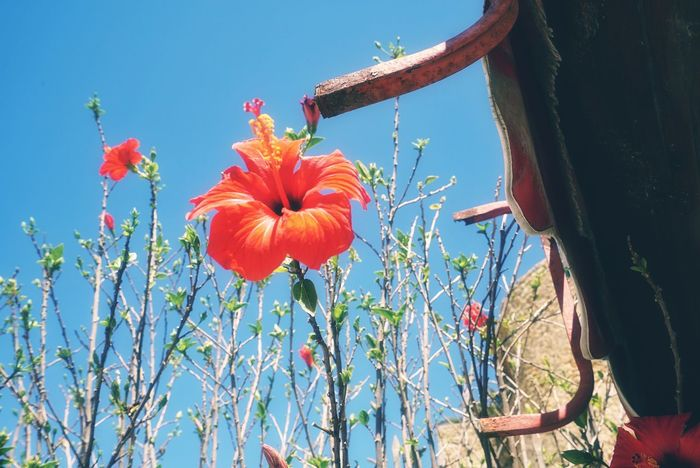 Morocco Photos Flowerpark Red Flower Flower Head Growth Day Plant Nature Outdoors Sky Freshness Tree Rural Scene Blue Fragility Clear Sky Beauty In Nature Close-up Relaxing Travel Journey Morocco Enjoying The View Streamzoofamily