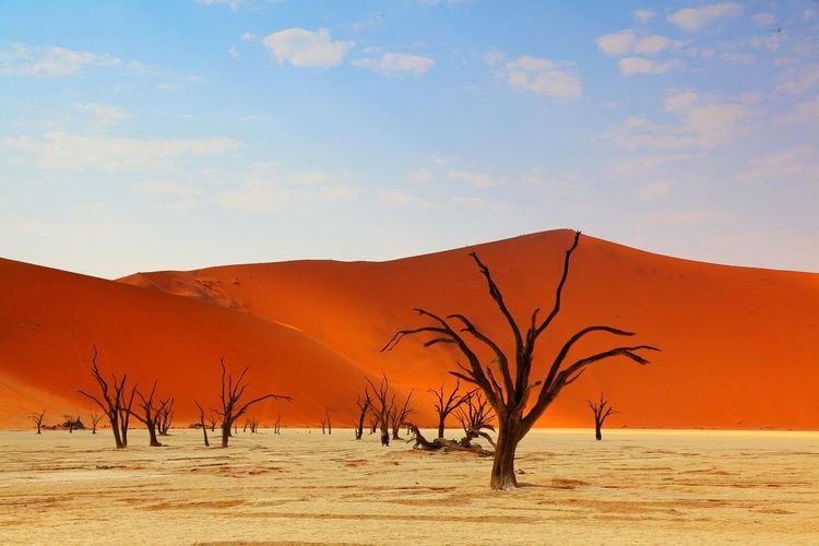 Deadvlei Desert Namibia Sossusvlei Tree Close-up Sky