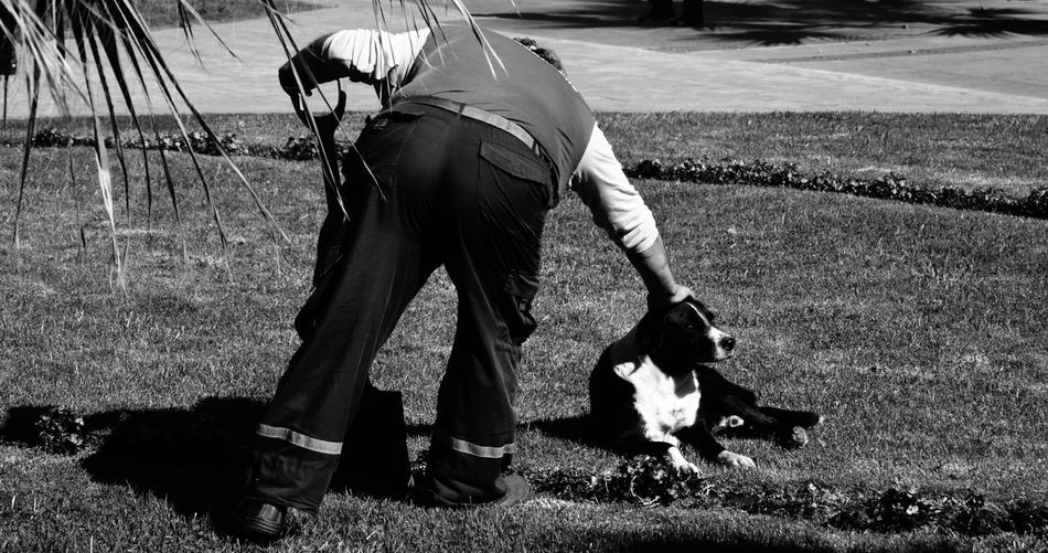 Rear View Of Gardener Petting Border Collie Lying On Grass