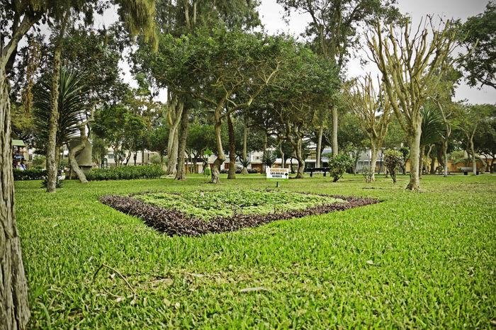 jardines arboles vegetacion Arboles Cesped Day Grass Growth Jardin Nature Outdoors Vegetacion