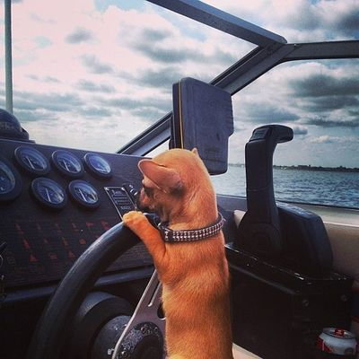 Me and capt zigs miss our vessel. Who wants to buy us a boat? Captainandtheskipper Repost Dailyzigga