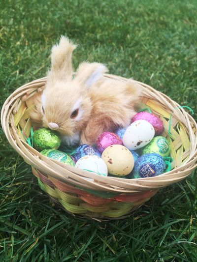High Angle View Of Bunny With Easter Eggs In Basket On Grassy Field