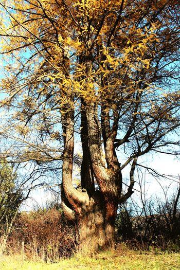 Gectorfontroy Bashkortostan Ural Naturelovers Forest Russian Nature N