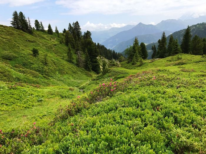 Mountain Green Color Nature Growth Beauty In Nature Tree No People Scenics Mountain Range Landscape Day Outdoors