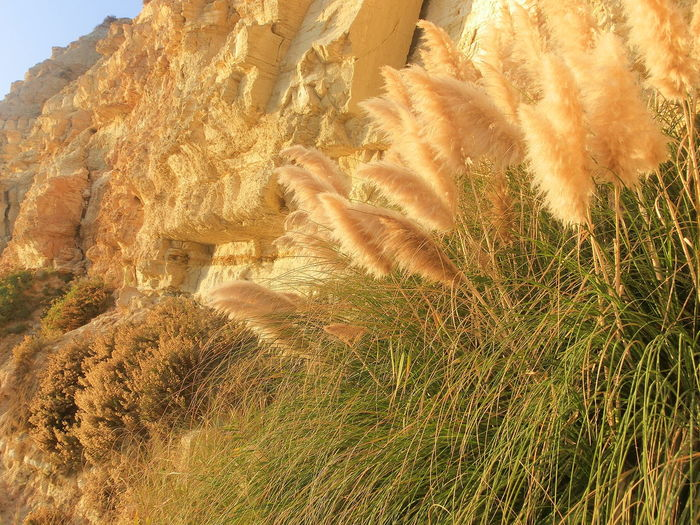 Cliff Sandstone Limestone Pampas Grass Golden Hour Beauty In Nature Day Grass Nature No People Outdoors Sky