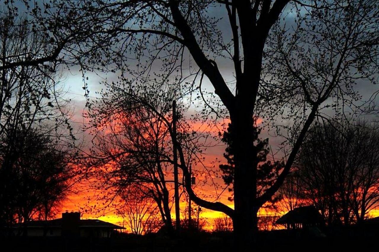 tree, silhouette, sunset, nature, bare tree, no people, sky, beauty in nature, outdoors, branch, architecture, scenics, forest fire, night, building exterior