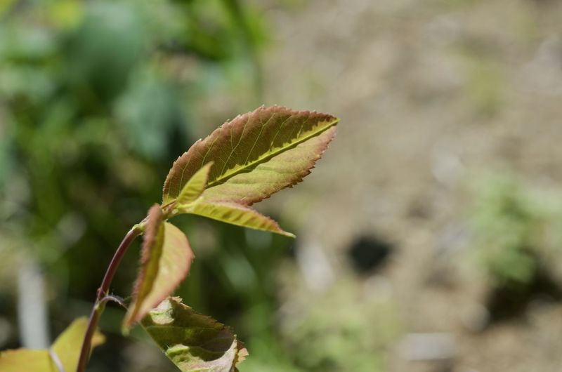 Leaf Close-up Plant Green Color