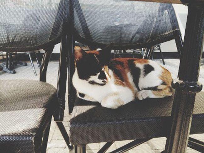 Pisicik Meow🐱 Cat Kedicik 🐈