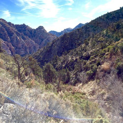 Redrockcanyon Lamadretrail Hiking
