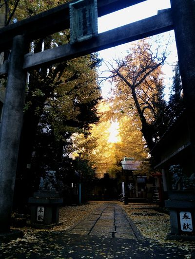 あ、神様。 そこにいらっしゃいましたかw Hello World Tokyo,Japan Japanese Shrine Japan Light And Shadow Yellow Leaves EyeEmbestshots
