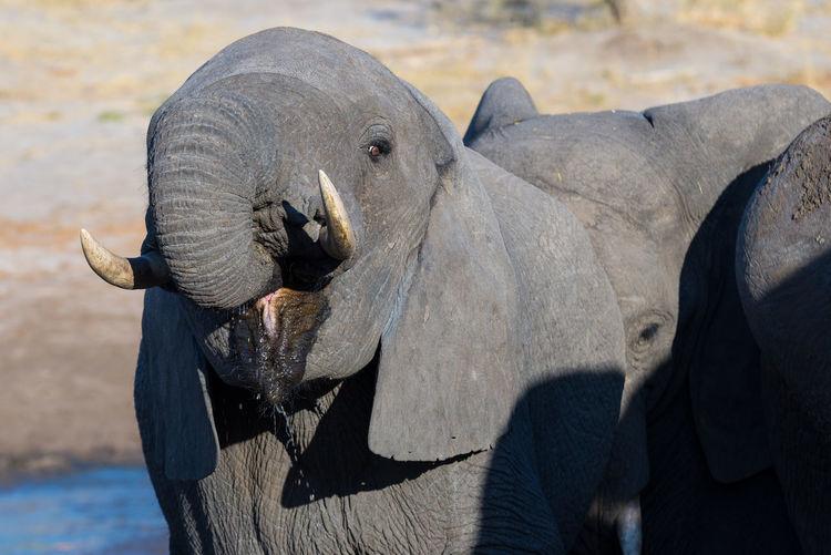 Close-up of elephants outdoors
