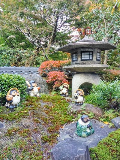 石灯籠 Japanese Stone Lantern Basketball Tanuki Baseball Tanuki Football Tanuki Green Moss Green Tranquility Japanese Outdoor Lamp Japanese Garden Japanese Illumination Tanuki Architecture Day Plant Building Exterior Rock - Object Beauty In Nature Water Tree Built Structure Growth
