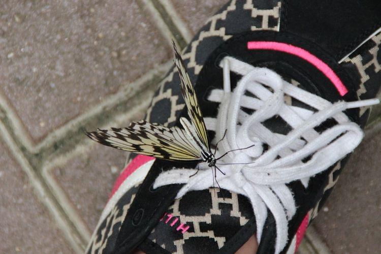 Spot The Butterfly