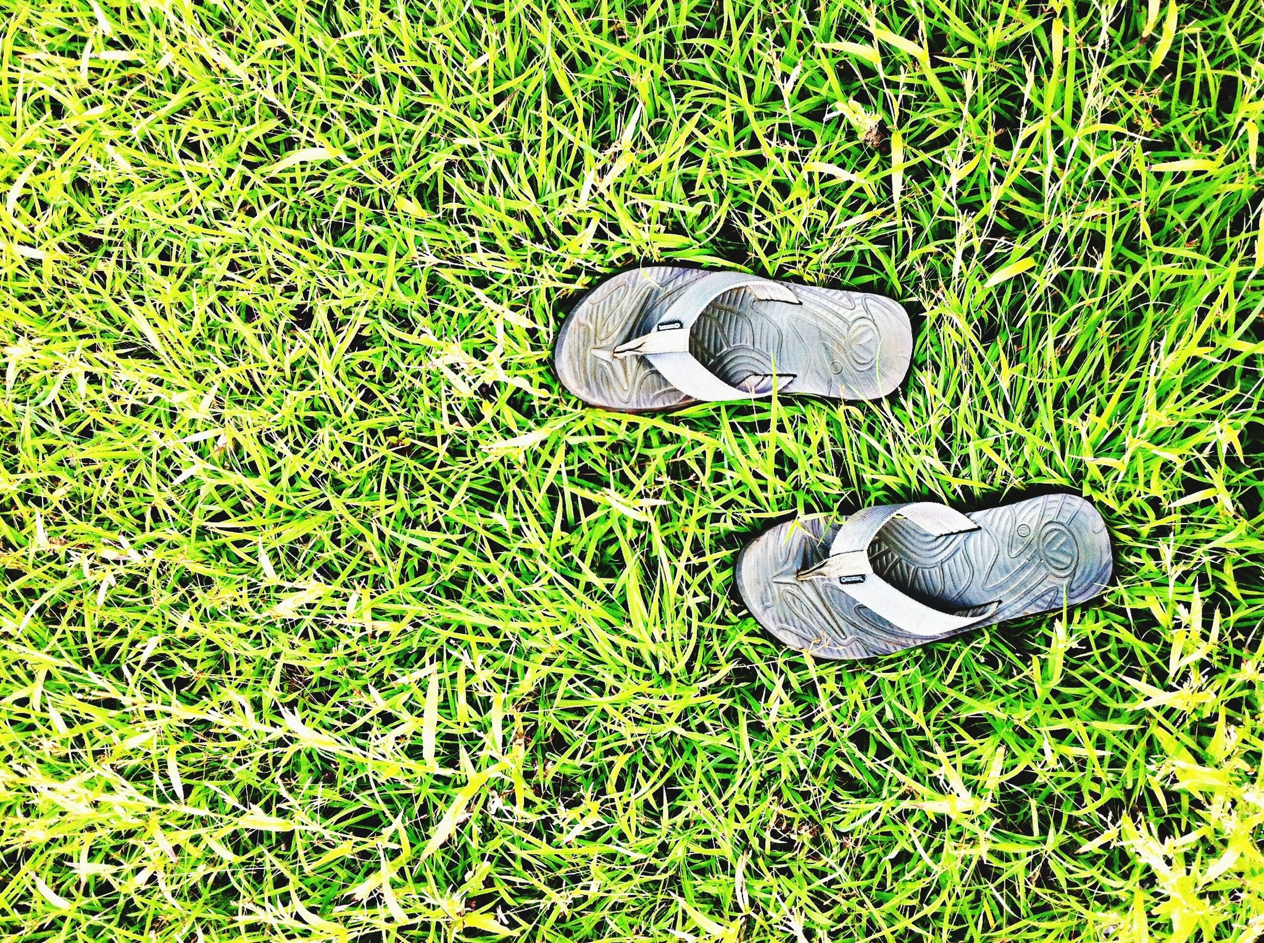 grass, grassy, field, green color, high angle view, shoe, old, growth, still life, communication, abandoned, close-up, day, footwear, metal, plant, number, lawn, grassland, no people