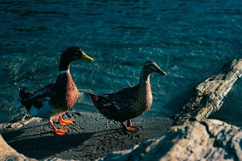 Ducks on rock by lake