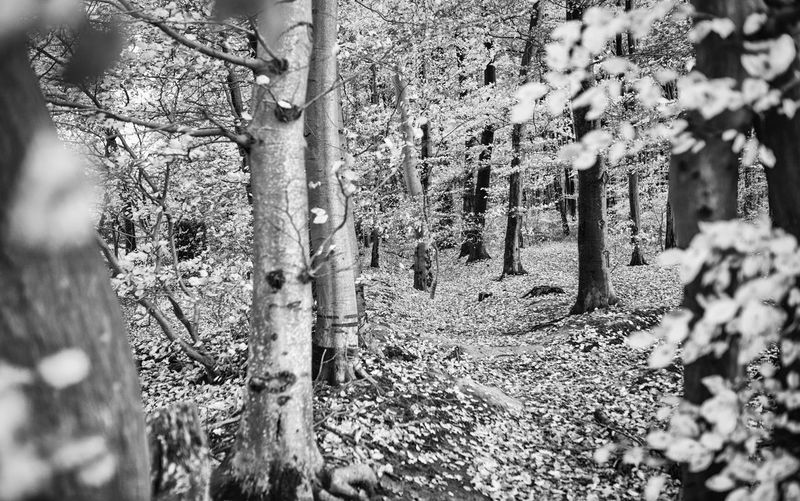 Tree Land Plant Trunk Tree Trunk Forest Growth Nature Tranquility Day Selective Focus No People Beauty In Nature Tranquil Scene Outdoors WoodLand Field Scenics - Nature Landscape Environment