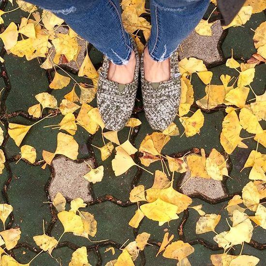 Fallenleaves Rainy Wetroad Autumn Fall Toms Jean Yellow Ginko Photobyphone 가을 비온뒤 낙엽 노랑 은행잎 어느새 단풍이 이렇게 예쁘게 들었다니... 벌써 11월 중순이구나..