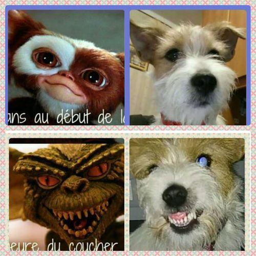 Lello Jack Russell cane dog mask