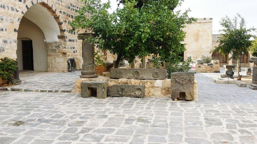 Museum Um Qais Irbid Today :) Taking Photos EyeEm Tree Building Exterior