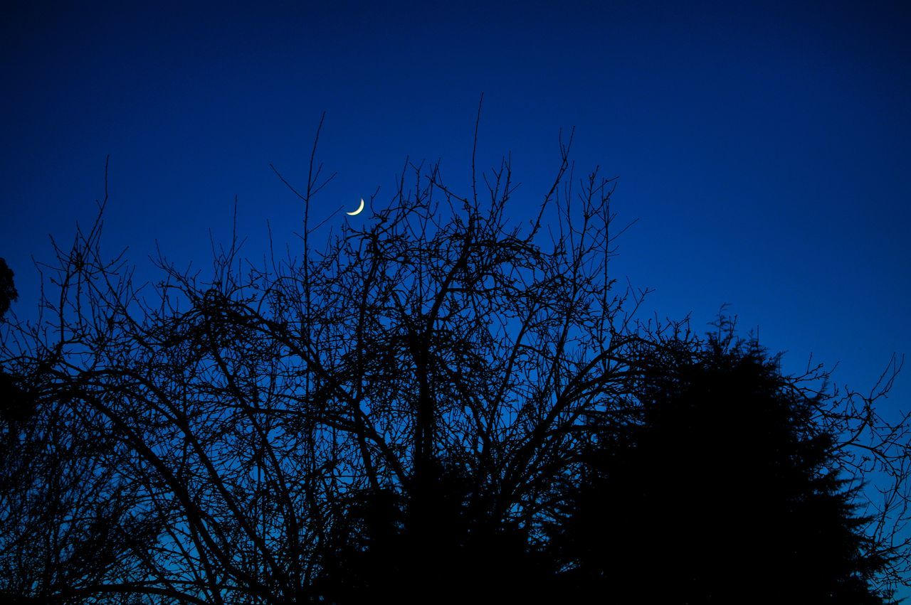 bare tree, tree, nature, silhouette, low angle view, animals in the wild, blue, no people, animal themes, outdoors, clear sky, branch, bird, beauty in nature, growth, moon, tranquility, sky, animal wildlife, night, astronomy