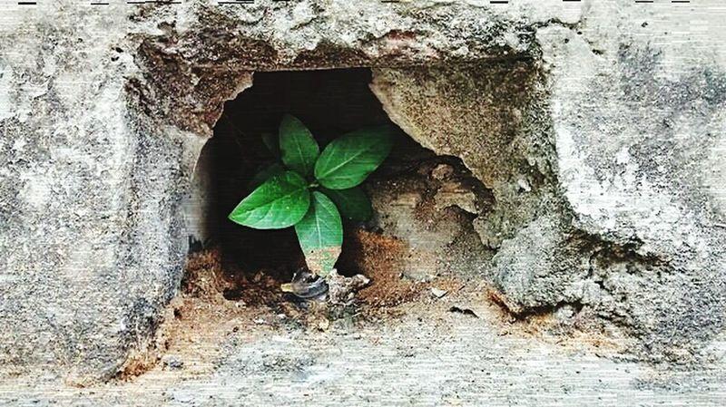 Naturelovers Newlife💛 Plants 🌱 Risingfromthedarkness