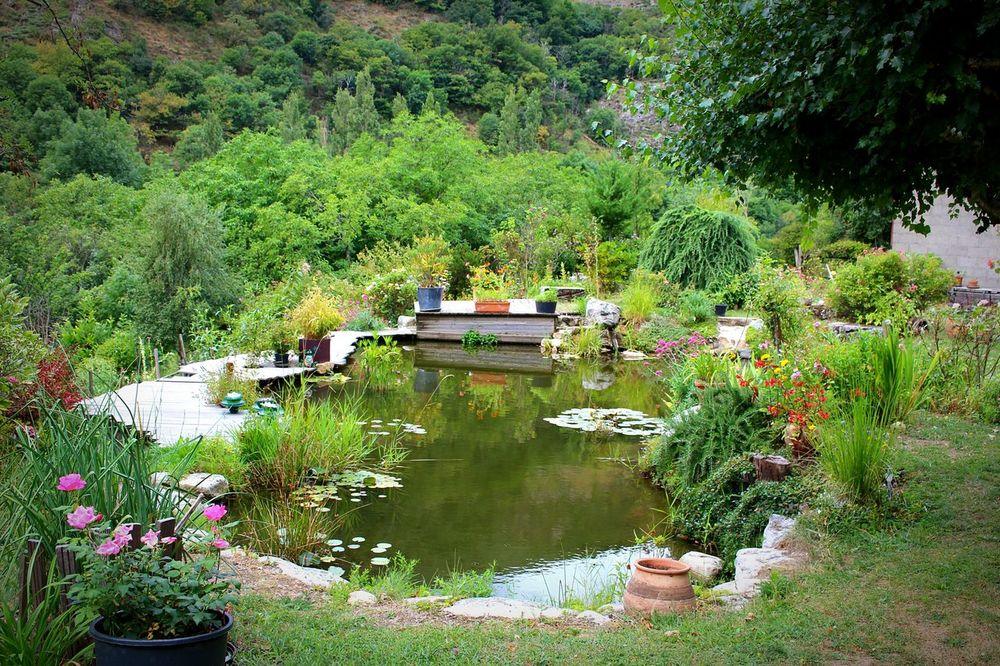 Nenuphar Jardin Zen Ardeche Reflection Nature Water Mare