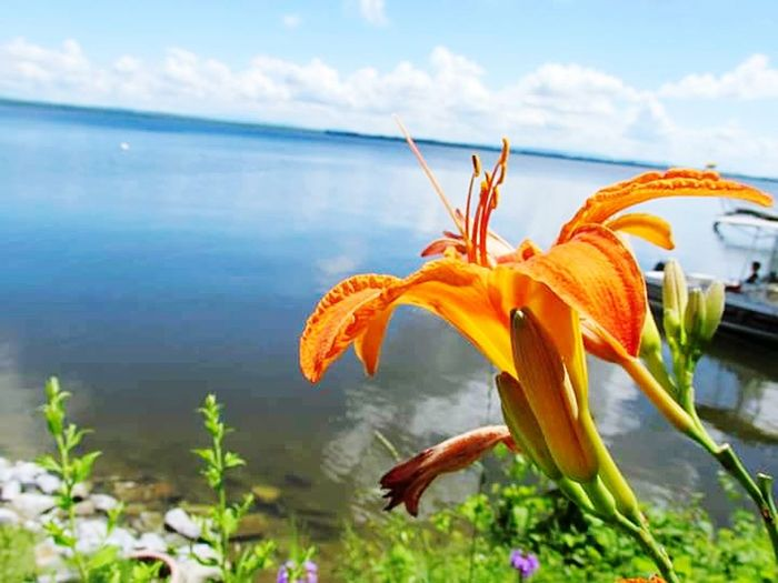 Nature Plant Flower Close-up Beauty In Nature Day Outdoors No People Freshness Water Fragility Sky Day Lily Flower Head