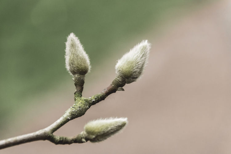 Close-up of bud