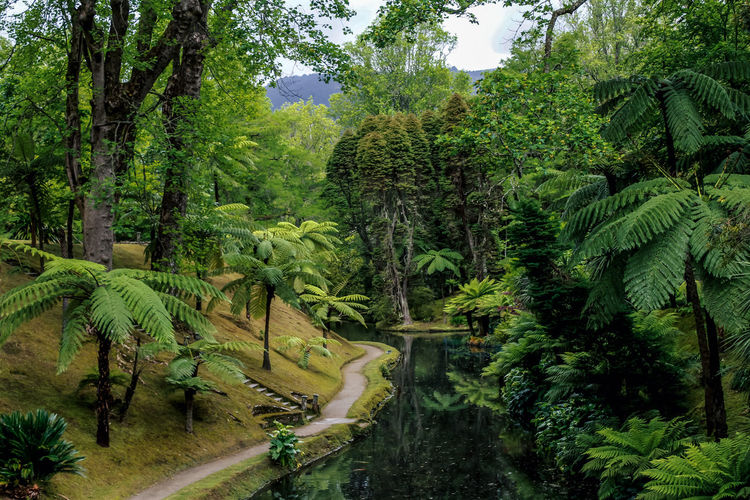 Ancient Azores Azores Islands Portugal Portugal Is Beautiful Terra Nostra Park Azores, Beauty In Nature Environment Foliage Green Color Growth Lake Land Lush Foliage Nature Plant Portugal_em_fotos Rainforest Scenics - Nature Tranquil Scene Tranquility Tree Water WoodLand