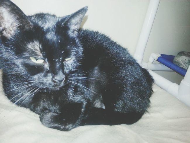 Humanesociety Cats Cat Cutepets