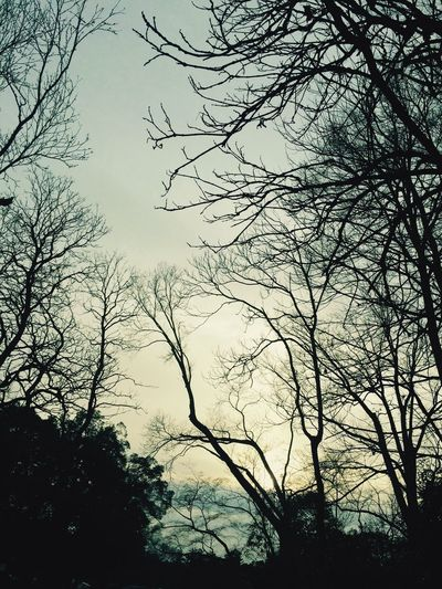 Hugging A Tree Winter Sky Sunset