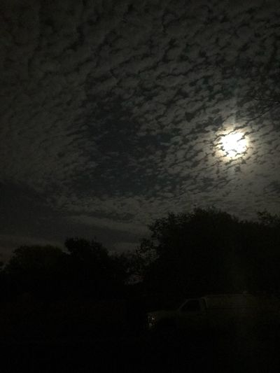 11/05/90 my Birthday! Night Moon Tree Sky Silhouette Moonlight Dark Illuminated Nature No People Cloud - Sky Spooky Low Angle View Beauty In Nature Scenics Outdoors Astronomy Mysterious Sky Peaceful Peace And Quiet Amateur Photography Second Act Eyembestshot Amaturephotography EyeEm Best Shots