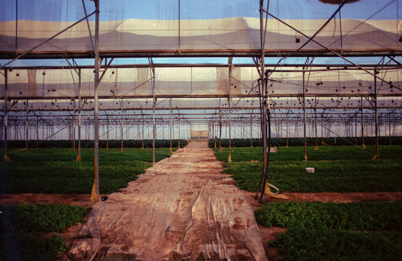 View of plants in greenhouse against sky