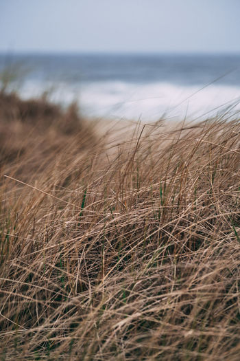 Beach Beach Beauty In Nature Day Grass Growth Horizon Horizon Over Water Land Marram Grass Nature No People Outdoors Plant Reed Reed - Grass Family Reeds Scenics - Nature Sea Selective Focus Sky Timothy Grass Tranquil Scene Tranquility Water