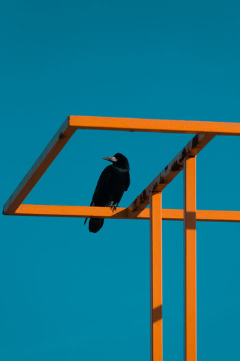 Low angle view of bird perching against blue sky