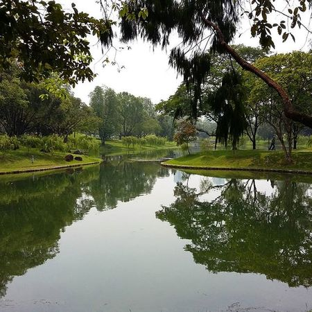 Bishan-Ang Mo Kio park Publicspace Park Bihan Amk Angmokio Lovethenature Nature Trees