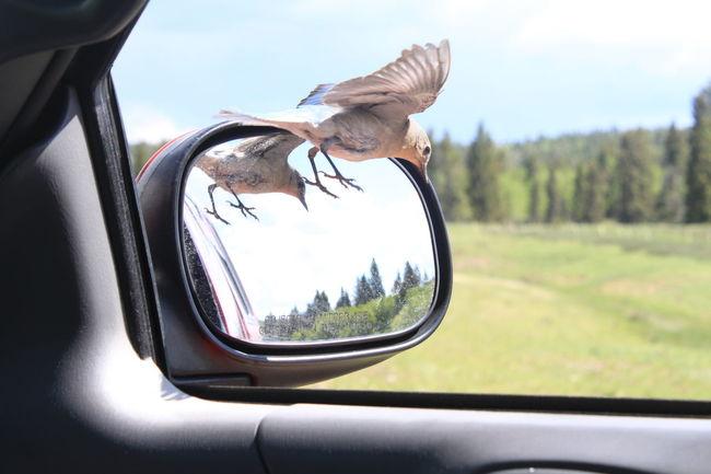 Backgrounds Battle Bluebird First Eyeem Photo Flight Mirriorshot Mirror Narcissus Silly