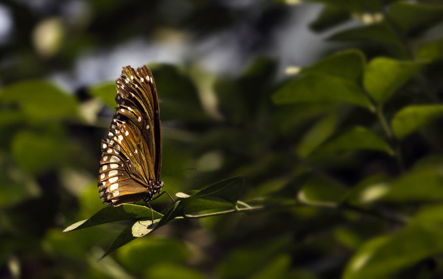 Butterfly Garden Butterfly ❤ Fly Animal Themes Animals In The Wild Beauty In Nature Butterflies Butterfly Butterfly - Insect Butterfly Collection Close-up Day Freshness Growth Insect Leaf Nature No People One Animal Outdoors Plant