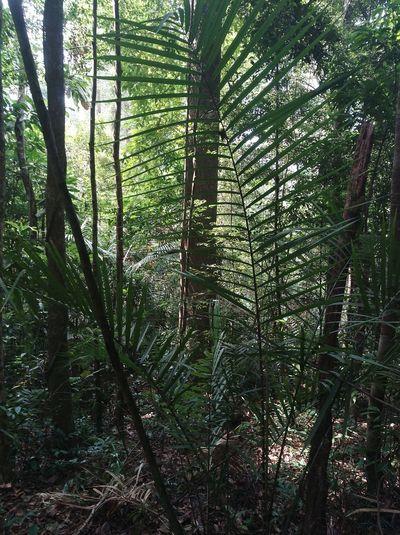 jungles Jungle