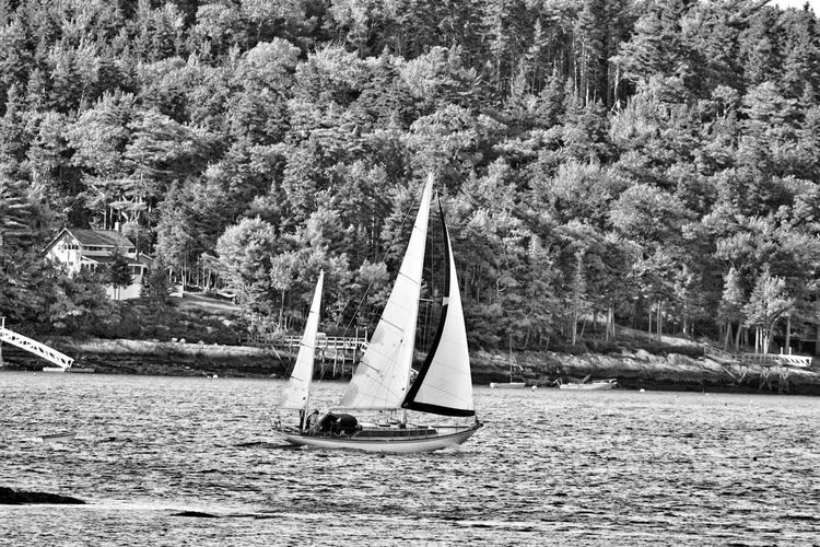 Sailboat Inderway black and white friday Under Sail Tree Plant Nature Growth Day Beauty In Nature Land Sailboat Outdoors Tranquility Non-urban Scene No People Water Sunlight Scenics - Nature Forest Canvas