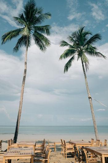 Bali Banner Beach Blue Card Template Caribbean Ceylon Coastline Coconut Day Destination Dominican Grunge Holiday INDONESIA Nature Outdoors Palm Tree Retro Scenics Sea Sky Tree Tropical Vintage