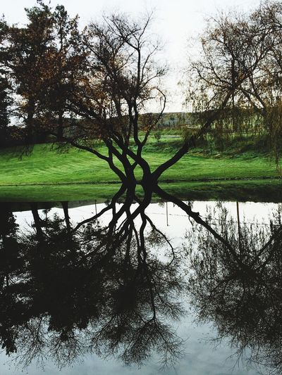 Tree Nature Water Reflection Green Color Beauty In Nature Grass Knots Celtic Outdoors Growth Day Scenics Beauty In Nature