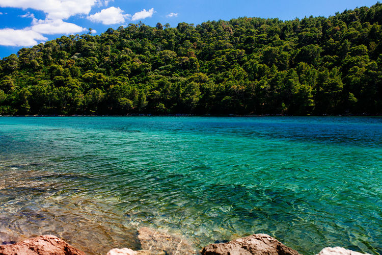 Mljet National Park Beauty In Nature Clear Water Croatia Crystal Clear Day Forest Green Color Growth Jungle Mljet National Park Nature No People Outdoors Scenics Sea Sky Summertime TeamCanon Tranquil Scene Tranquility Tree Water