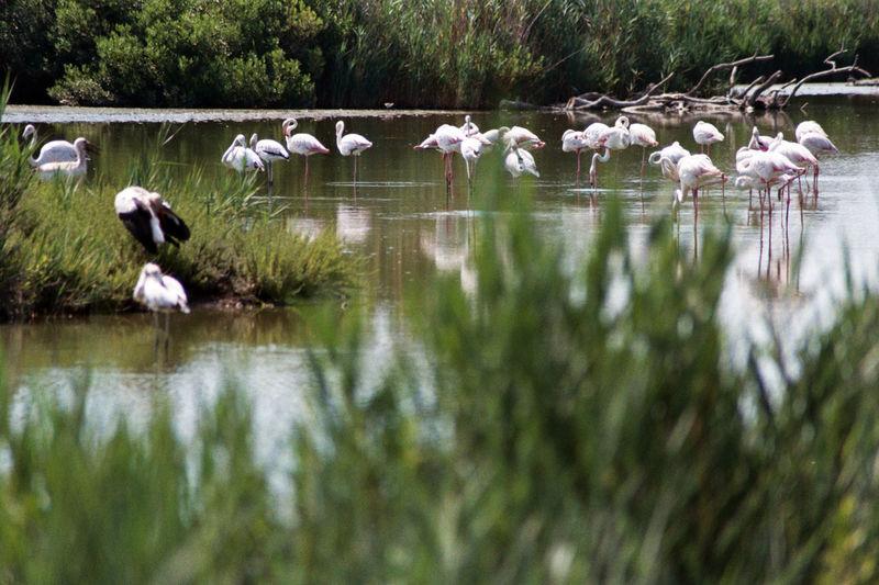 Flocks of