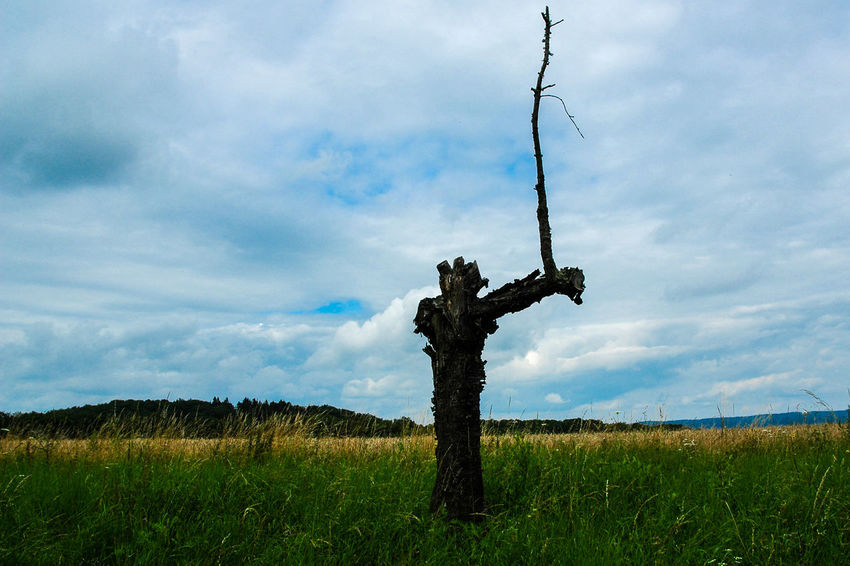 Beauty In Nature Dead Trees Decayed Beauty Desintegration Of Structures Landscape Nature Sky Tree Watcher