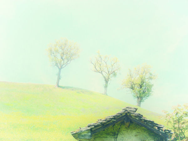 Untitled #2 Architecture House Nature Outdoors Sky Spirituality Tranquility Tree