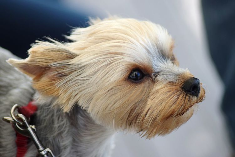 Budapest Hungary Pets Portrait Dog Cute Wet Puppy Animal Hair Close-up