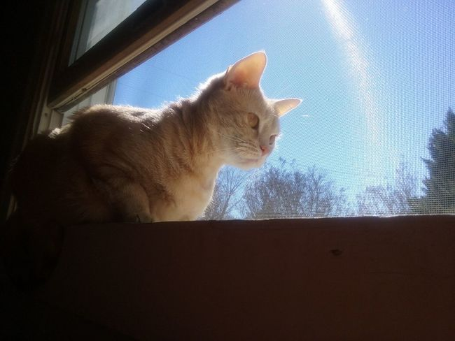 Cat♡ Cat Lovers Samantha  Watching The Squirrel Soakingupthesun My Sweetheart