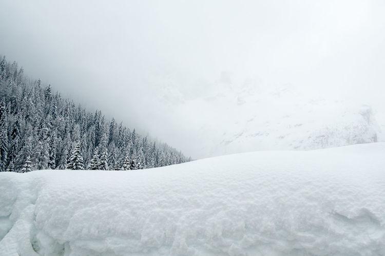 Forest Frozen