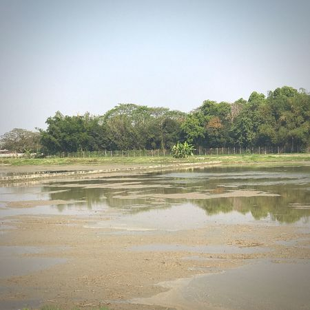 Preparing For An Event Processing Rice Fields  Rice Field Tree Water Nature Sky Outdoors Clear Sky Scenics Day Tranquil Scene Beauty In Nature No People Sand Beach